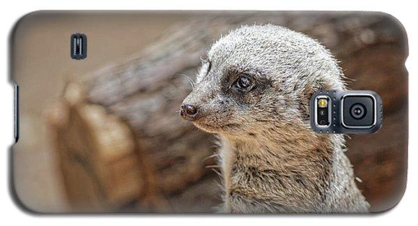 Meerkat Galaxy S5 Case