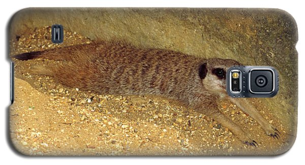 Meerkat Galaxy S5 Case - Meerkat Resting by Nigel Downer