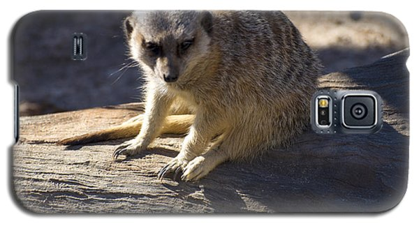 Meerkat Resting On A Rock Galaxy S5 Case by Chris Flees