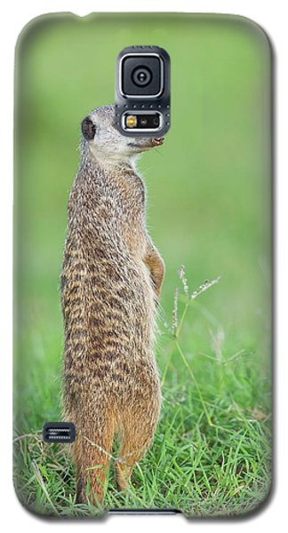 Meerkat Galaxy S5 Case - Meerkat Standing On Guard Duty by Peter Chadwick