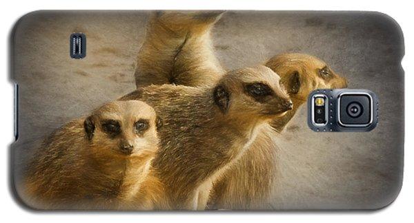 Meerkat Watch Galaxy S5 Case by Ian Merton