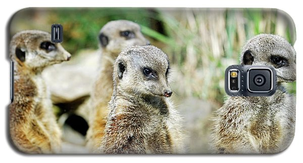 Meerkat Galaxy S5 Case - Meerkats by Heiti Paves