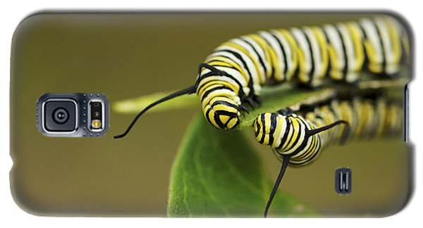 Galaxy S5 Case featuring the photograph Meeting In The Middle - Monarch Caterpillars by Jane Eleanor Nicholas