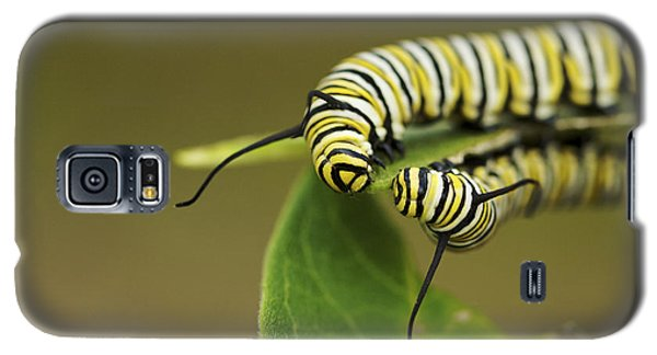 Meeting In The Middle - Monarch Caterpillars Galaxy S5 Case