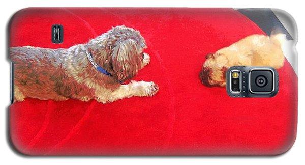 Dog And Puppy Pet Photography Lhasa Apso Shih Tzu Pomeranian   Galaxy S5 Case