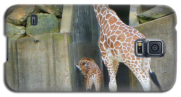 Galaxy S5 Case featuring the photograph Memphis Girraffe by Shirley Moravec