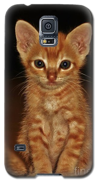 Galaxy S5 Case featuring the photograph Meow by Craig Wood