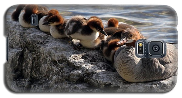 Merganser Family Galaxy S5 Case