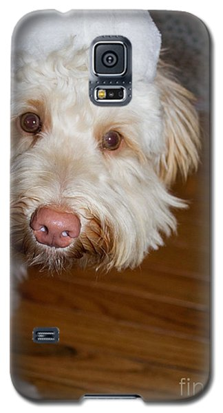 Merry Christmas From A Labradoodle Galaxy S5 Case