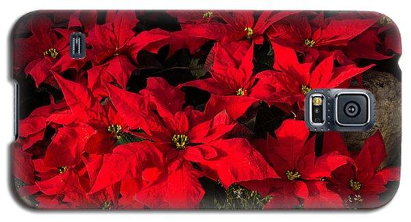 Merry Scarlet Poinsettias Christmas Star Galaxy S5 Case