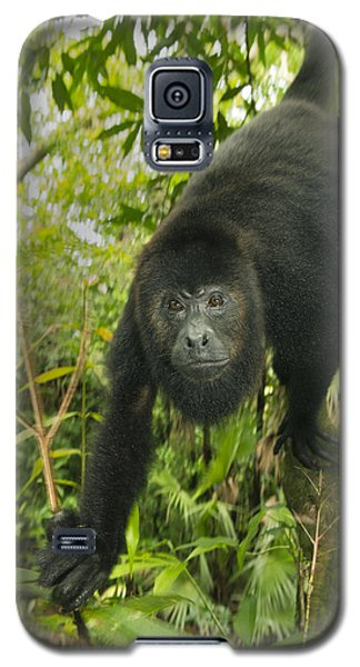 Mexican Black Howler Monkey Belize Galaxy S5 Case