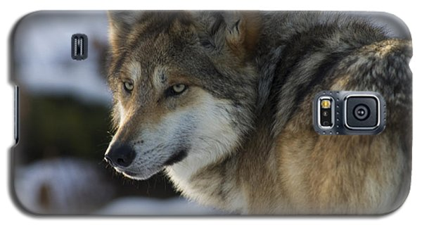 Mexican Gray Wolf Galaxy S5 Case