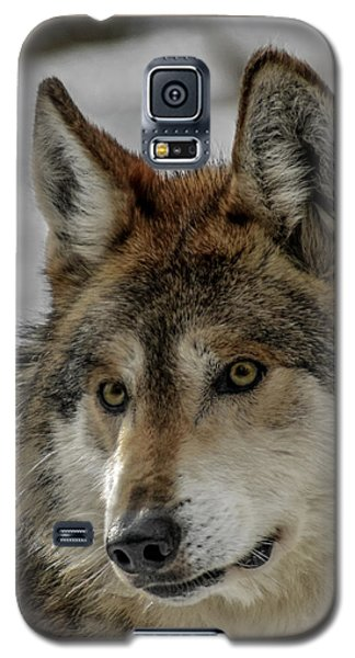 Mexican Grey Wolf Upclose Galaxy S5 Case