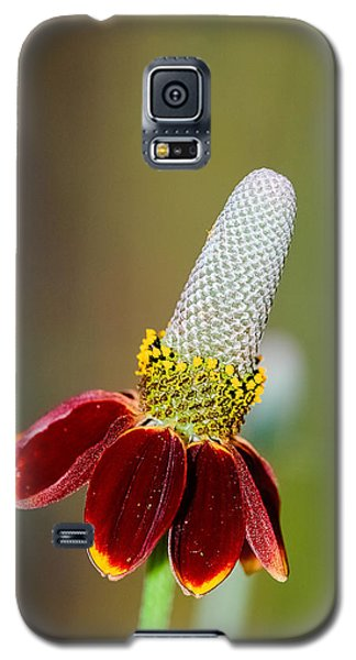 Mexican Hat Galaxy S5 Case