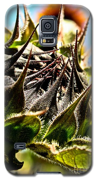 Galaxy S5 Case featuring the photograph Mexican Sunflower by Joel Loftus