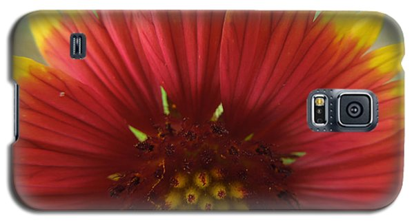 Galaxy S5 Case featuring the photograph Mexican Sunflower by Peg Toliver