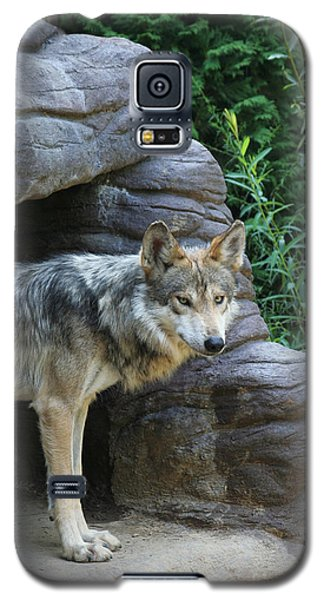 Mexican Wolf #2 Galaxy S5 Case