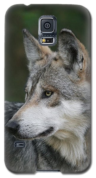 Mexican Wolf #6 Galaxy S5 Case by Judy Whitton