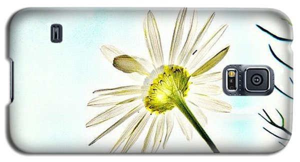 Instagramhub Galaxy S5 Case - #mgmarts #daisy #flower #morning by Marianna Mills