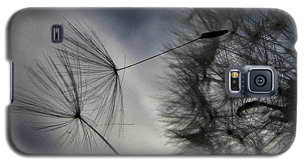 #mgmarts #dandelion #makeawish #wish Galaxy S5 Case