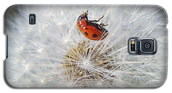 #mgmarts #dandelion Galaxy S5 Case by Marianna Mills