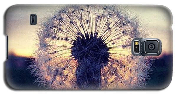 Sky Galaxy S5 Case - #mgmarts #dandelion #sunset #simple by Marianna Mills