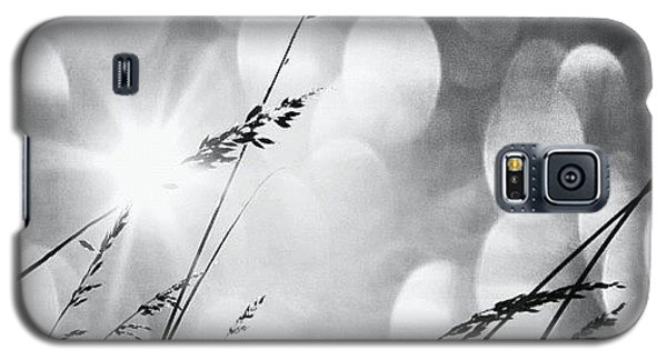 Sunny Galaxy S5 Case - #mgmarts #grass #weed #wind #field by Marianna Mills