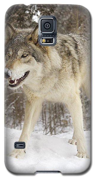 Micah  Galaxy S5 Case