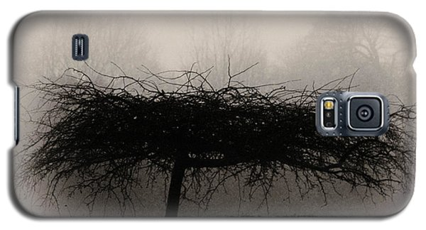 Middlethorpe Tree In Fog Sepia - Award Winning Photograph Galaxy S5 Case