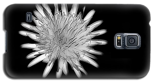 Galaxy S5 Case featuring the photograph Midnight Dandelion by Ludwig Keck