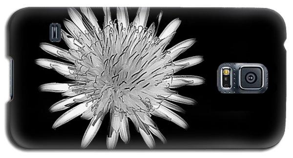 Midnight Dandelion Galaxy S5 Case