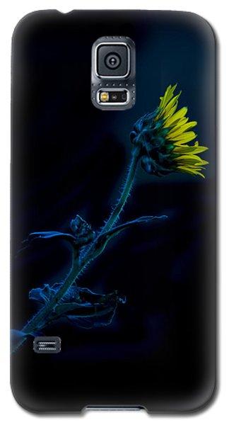 Midnight Sunflower Galaxy S5 Case by Darryl Dalton