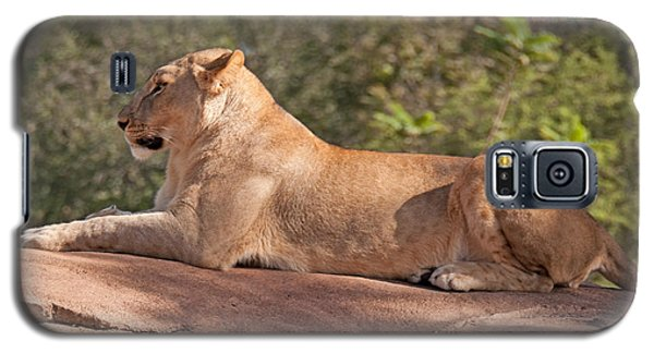 Galaxy S5 Case featuring the photograph Mighty Queen Of The Jungle by John Black