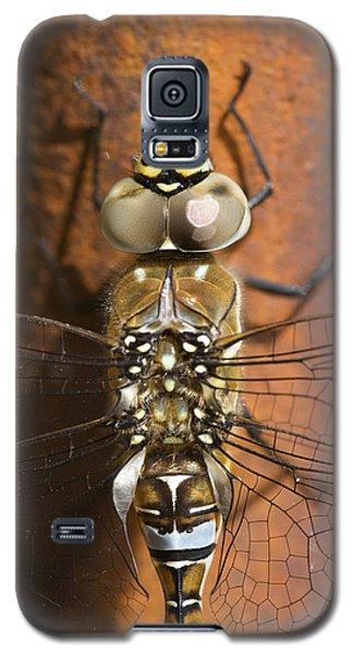 Migrant Hawker Dragonfly Closeup Galaxy S5 Case