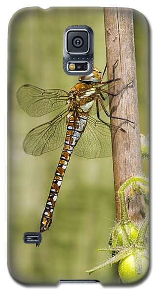Migrant Hawker Dragonfly Galaxy S5 Case