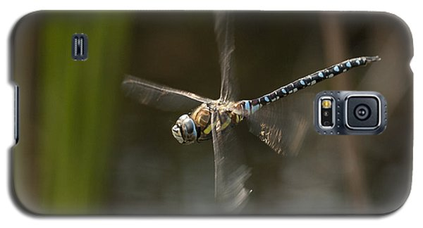 Migrant Hawker Dragonfly In Flight Galaxy S5 Case