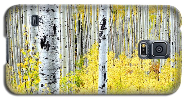 Miles Of Gold Galaxy S5 Case by The Forests Edge Photography - Diane Sandoval