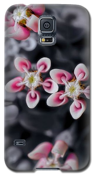 Milkweed Snowflakes Galaxy S5 Case by Henry Kowalski