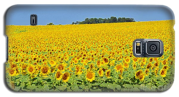 Millions Of Sunflowers Galaxy S5 Case
