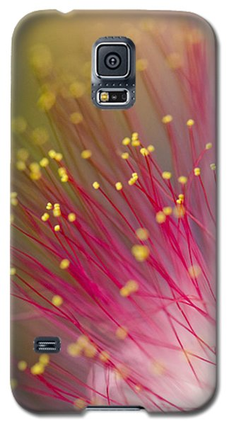 Mimosa Blossom 3 Galaxy S5 Case by Dan Wells