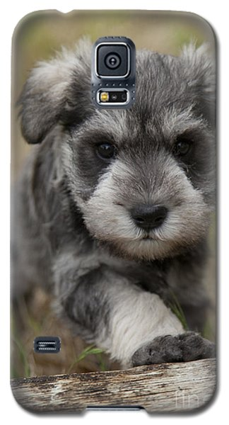 Galaxy S5 Case featuring the photograph Mini Schnauzer Puppy by Serene Maisey