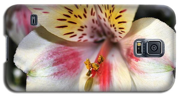Galaxy S5 Case featuring the photograph Miniature Oriental White Lily by Judy Palkimas