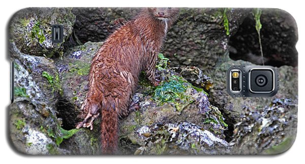 Galaxy S5 Case featuring the photograph Mink At Low Tide by Peggy Collins