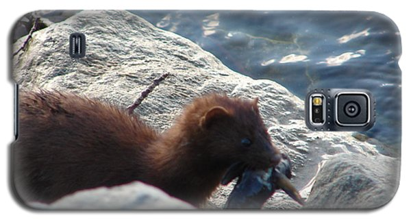 Mink With A Round Goby Galaxy S5 Case