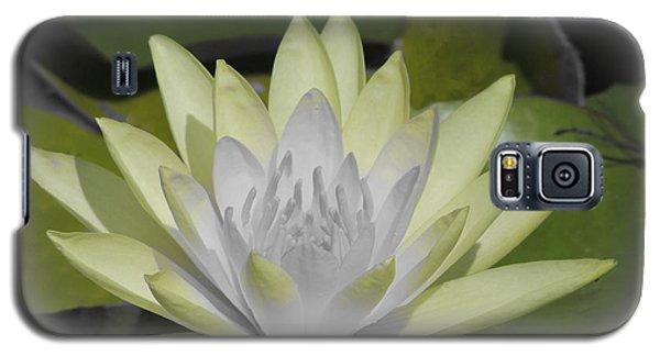 Mint Galaxy S5 Case by Teresa Schomig