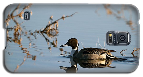 Northern Pintail Mirror Image Galaxy S5 Case