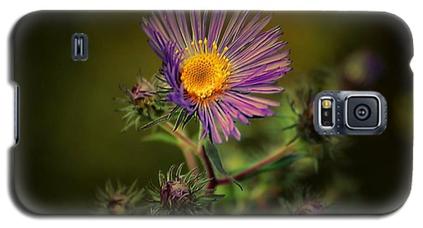 Miss Aster Galaxy S5 Case