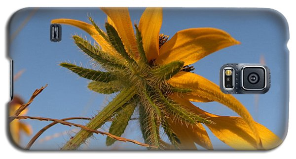 Galaxy S5 Case featuring the photograph Miss Daisy by Joseph Skompski