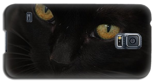 Galaxy S5 Case featuring the photograph Miss Golden Eyes  by Amy Gallagher
