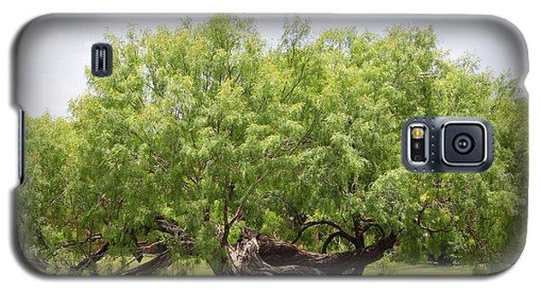Mission Espada - Tree Galaxy S5 Case by Beth Vincent